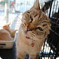 Adopt A Pet :: Gillian - Santa Monica, CA