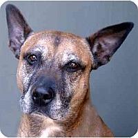 Adopt A Pet :: Kenya - New York, NY