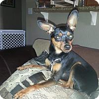 Adopt A Pet :: Jordy - Oceanside, CA