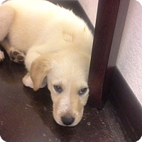 Adopt A Pet :: Buster - Silsbee, TX