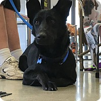 Adopt A Pet :: BENTLEY - SAN ANTONIO, TX