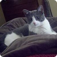 Adopt A Pet :: Eleanor Frances - Bentonville, AR