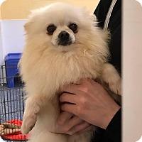 Adopt A Pet :: Ben - San Francisco, CA