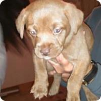 Adopt A Pet :: Gamora - Warsaw, IN