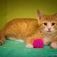 Adopt A Pet :: Flora - Circleville, OH