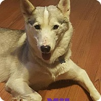 Adopt A Pet :: Mika -Adopted July 2017 - Huntsville, ON
