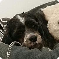 Adopt A Pet :: Mickey Turner - Urbana, OH