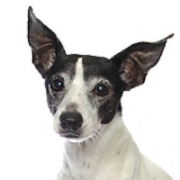 Adopt A Pet :: Peanut - oakland park, FL