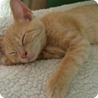 Adopt A Pet :: Percy - McHenry, IL
