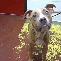 Adopt A Pet :: PAIGE - Atlanta, GA