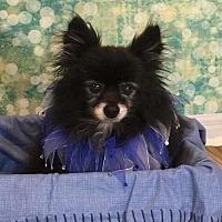 Adopt A Pet :: Merlin - Dallas, TX