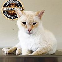 Adopt A Pet :: Janine - Oakdale, CA