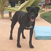 Adopt A Pet :: Gilly - Potomac, MD