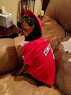 Miniature Pinscher Dog for adoption in Richmond, Kentucky - Dane