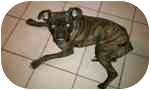 Boxer Dog for adoption in Plainfield, Illinois - Butch
