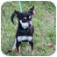 Photo 2 - Chihuahua Mix Dog for adoption in McKinney, Texas - Tanom