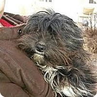 Adopt A Pet :: Rags - Seattle, WA
