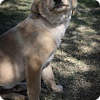 Adopt A Pet :: Beethoven - Broomfield, CO