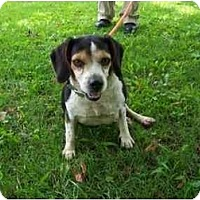 Adopt A Pet :: Nellie WHEELCHAIR - Indianapolis, IN