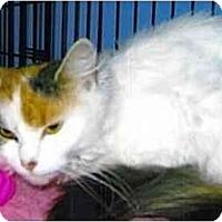 Adopt A Pet :: Cricket - Medway, MA