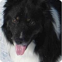Adopt A Pet :: Bing - Salt Lake City, UT