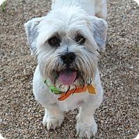 Adopt A Pet :: Heath - Phoenix, AZ