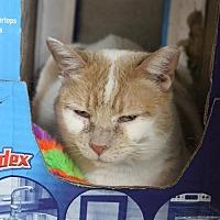 Adopt A Pet :: Lulu - Herndon, VA