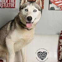 Adopt A Pet :: Conrad - Inglewood, CA