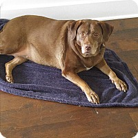 Adopt A Pet :: Ellie Mae - Pittsboro, NC