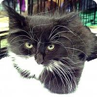 Adopt A Pet :: Sienna (IR) - Trenton, NJ