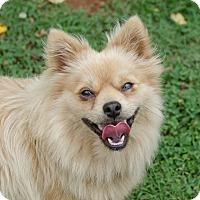 Adopt A Pet :: Peanut - Greenwood, SC