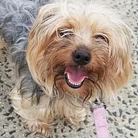 Adopt A Pet :: King - Bronx, NY
