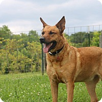 Adopt A Pet :: Michael - Greeneville, TN
