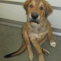 Adopt A Pet :: Bailey - Holton, KS