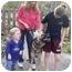 Photo 4 - German Shepherd Dog/German Shepherd Dog Mix Dog for adoption in Baltimore, Maryland - Ranger