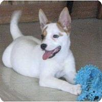 Adopt A Pet :: CHINA - Plainfield, CT
