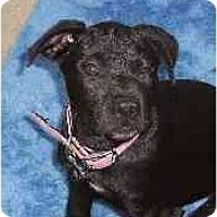 Adopt A Pet :: Glory - Hoffman Estates, IL