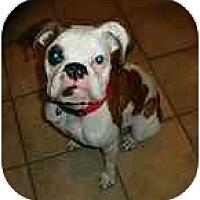 Adopt A Pet :: Milkshake - Albany, GA