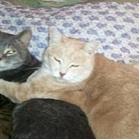 Adopt A Pet :: Bianca - Kohler, WI