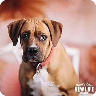Boxer Mix Dog for adoption in Portland, Oregon - Lilith