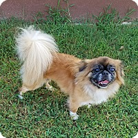 Adopt A Pet :: Sonny - San Antonio, TX