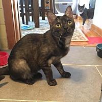 Adopt A Pet :: Marble - Rochester Hills, MI