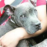 Adopt A Pet :: Sophie - Fillmore, CA