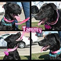 Adopt A Pet :: Tammy - White Settlement, TX