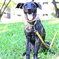 Adopt A Pet :: Donna - Castro Valley, CA