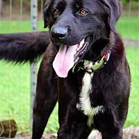 Adopt A Pet :: Ray - thibodaux, LA