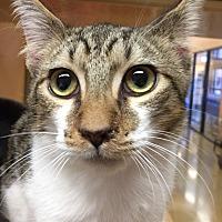 Adopt A Pet :: Monroe - Morganton, NC