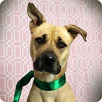 Adopt A Pet :: SUNSET (video) - Los Angeles, CA