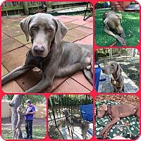 Adopt A Pet :: DRAKE - Inverness, FL