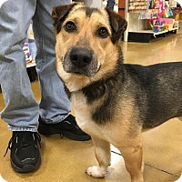 Adopt A Pet :: Balto - Sugar Grove, IL